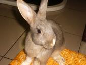 兔子:P1110811.JPG
