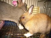 兔子:P1110792.JPG