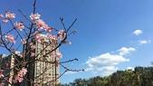 【2017-18。 台灣】花岩山林烤肉。大板根。三峽老街,北大校園櫻花季:台北大學三峽分校