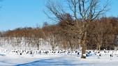【2015北海道】阿寒湖,SL濕原列車鶴見台,摩周湖,和琴半島屈斜路湖,川湯溫泉,古丹溫泉:鶴見台