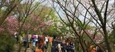 【2012北部】 陽明山花季_草山飄香: