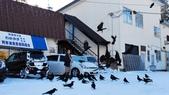 【2015北海道】阿寒湖,SL濕原列車鶴見台,摩周湖,和琴半島屈斜路湖,川湯溫泉,古丹溫泉:阿寒湖