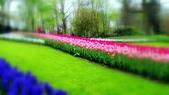 【2017。荷蘭】超極貴婦團之 庫肯霍夫花園Keukenhof 。羊角村:鬱金香花園  Keukenhof