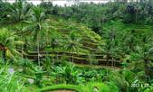 【2012巴里島】烏布住宿,聖泉廟芭杜爾湖,Lovina,烏布肉桂SPA: