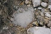 初探七星山 (13 March 2008):地下的超迷你溫泉坑