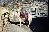Trekking in Nepal, Dec 2003:Bad-tempered companion