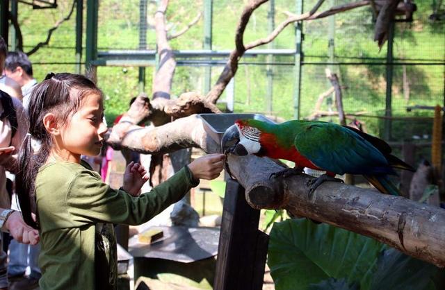 16.JPG - 1051112再訪森林鳥花園
