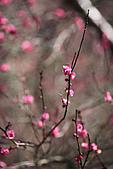 991218-武陵農場:IMG_1489.jpg