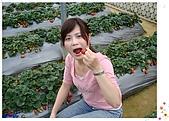 9802內湖草莓:小芬