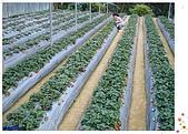 9802內湖草莓:草莓園
