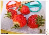 9802內湖草莓:草莓
