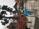 2019/12賞楓:C05FC638-02E2-4F21-93CD-DC7CAD48477E.jpeg