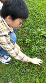 自然探索~昆蟲與動物:2014年在草地上觀察含羞草