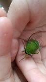 自然探索~昆蟲與動物:它可能在蛻殼時受到干擾而殘廢了