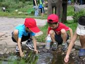 自然探索~昆蟲與動物:2008年在陽明山二子坪觀察蝌蚪