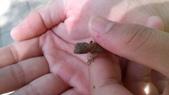 自然探索~昆蟲與動物: