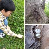自然探索~昆蟲與動物:相簿封面