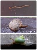 自然探索~昆蟲與動物:2014年在花蓮砂卡礑歩道