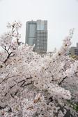 京阪奈櫻花第一瓣:京阪2015-0403-164108.JPG