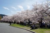 京阪奈櫻花第二辦:京阪2015-0404-104811.JPG