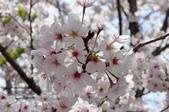 京阪奈櫻花第二辦:京阪2015-0404-105226.JPG