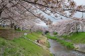 京阪奈櫻花第三瓣:京阪2015-0405-121738.JPG