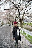 京阪奈櫻花第三瓣:京阪2015-0405-115054.JPG