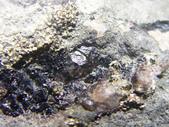 ◎木化石:公館凝灰-炭木化G1512