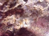 ◎植化琥珀:01樹林植物化石G1686.jpg