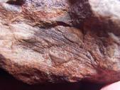 ◎植化琥珀:11樹林植物化石G1715.jpg