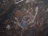 ◎化石探訪:桃園龜山_0933