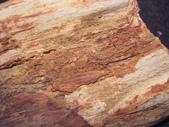 ◎木化石:13本土木化G8194.jpg