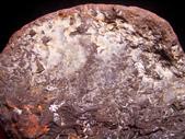 ◎植化琥珀:05樹林植物化石G1680.jpg