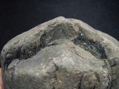 ◎木化石:北台灣木化石G1193