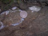 ◎化石探訪:桃園龜山_0938
