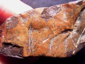 ◎植化琥珀:13樹林植物化石G1711.jpg