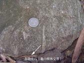 ◎化石探訪:桃園龜山_0952