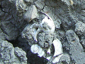 ◎化石探訪:龜山民宅化石