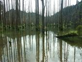 「 水漾森林」~尋幽探祕:PICT0126a.jpg