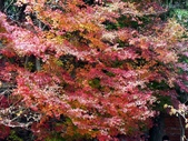 這一季的高山農場~武陵+福壽山:PICT0101a.jpg