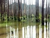 「 水漾森林」~尋幽探祕:PICT0127a.jpg