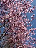 *227武陵櫻景~塞爆!!:調整大小 PICT0005a.jpg