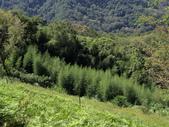 司馬庫斯山林漫步:IMG_4472a.jpg