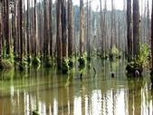 「 水漾森林」~尋幽探祕:PICT0128a.jpg