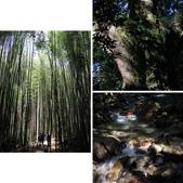 司馬庫斯之森林溪瀑:相簿封面