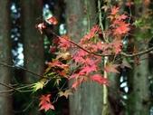這一季的高山農場~武陵+福壽山:PICT0117a.jpg