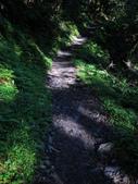 司馬庫斯山林漫步:IMG_4380a.jpg