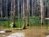 「 水漾森林」~尋幽探祕:PICT0131a.jpg