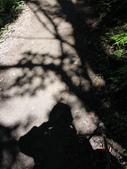 司馬庫斯山林漫步:IMG_4473a.jpg