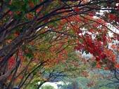 汐止拱北殿楓紅:PICT0024a.jpg
